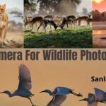 best dslr camera for wildlife photography